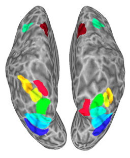 As study subjects attended to the appearance and location of patterned tiles, researchers recorded activity in many different parts of their brain