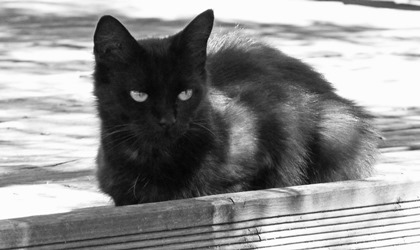 """""""It is important to note that just a few additional days at a shelter carry serious ramifications for the health and ultimate fate of a sheltered cat."""